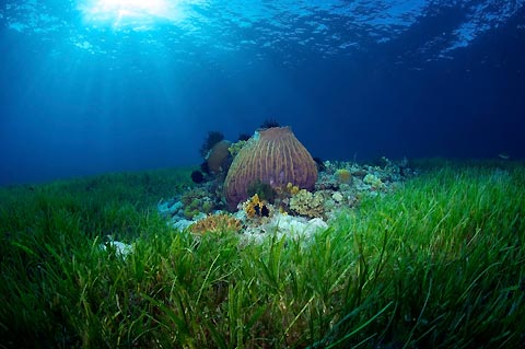 save coral reefs scr s seagrass restoration program