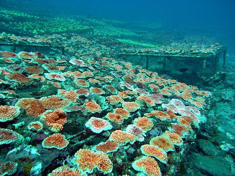 corals-blog480